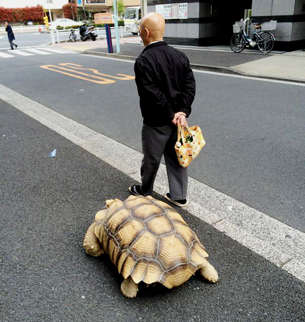 giant-tortoise-photo