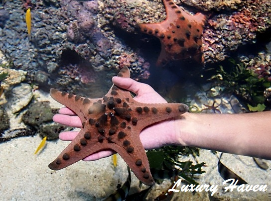 rws marine life park discovery touch pool star fish