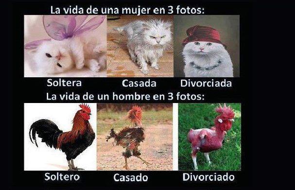 Imagenes Chistosas De Animales Con Frases