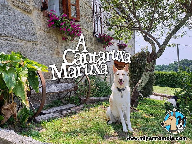 Can de Palleiro en la Casa Rural A Cantaruxa Maruxa