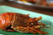 Hadrian Irfani : Nelayan NTB Harus Merasakan Manfaat Diizinkannya Bibit Lobster