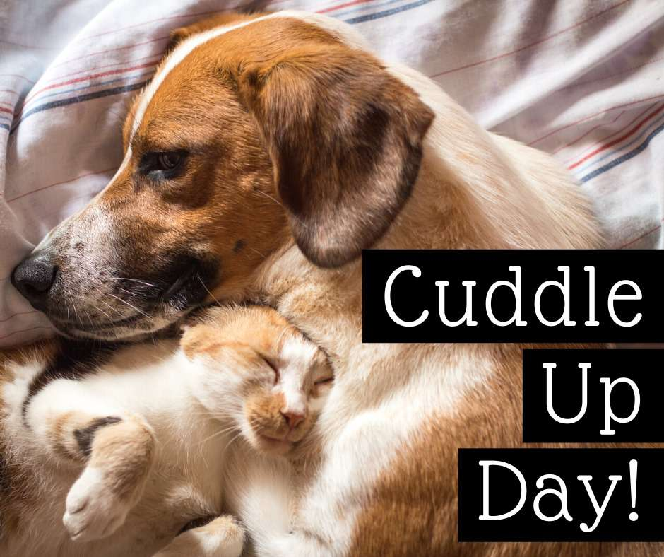National Cuddle Up Day Wishes Pics