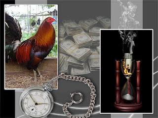 foto edita de un gallo