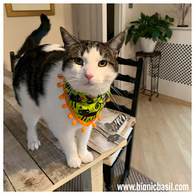 The Mini Pumpkin Trimmed Bandanna on Creepy Crafting with Cats ©BionicBasil®Halloween Special Melvyn