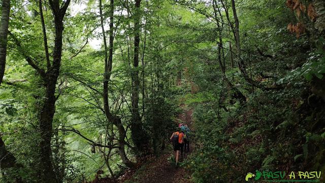Ascendiendo por el Bosque Fana, Ponga