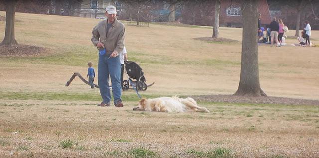 Este perrito no quería irse del parque ¡así que se hizo el muertito!