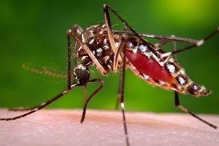 Secretaria de Saúde alerta para redobrar cuidados com mosquito Aedes aegypti no verão