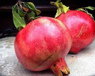 The pomegranate is widely cultivated in Northern and tropical areas of Africa.