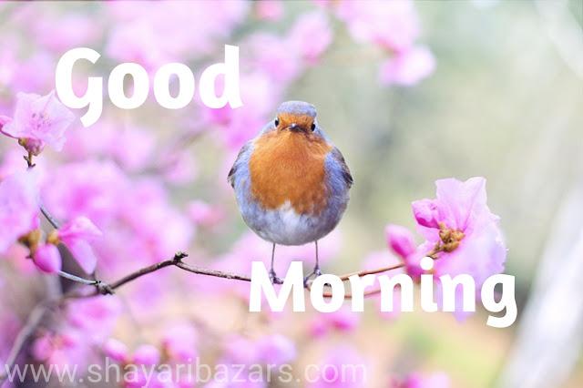 Good Morning Flower Images Free DownloadGood Morning Flower Images Free Download