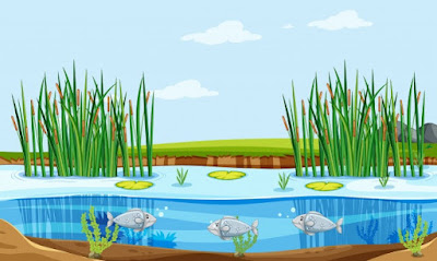 Fish Pond Management Guide For Beginners