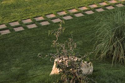 alee dale inierbate gradina peisagist alexandru gheroghe amenjari gradini gradina simpla gazon alun corylus avelana contorta