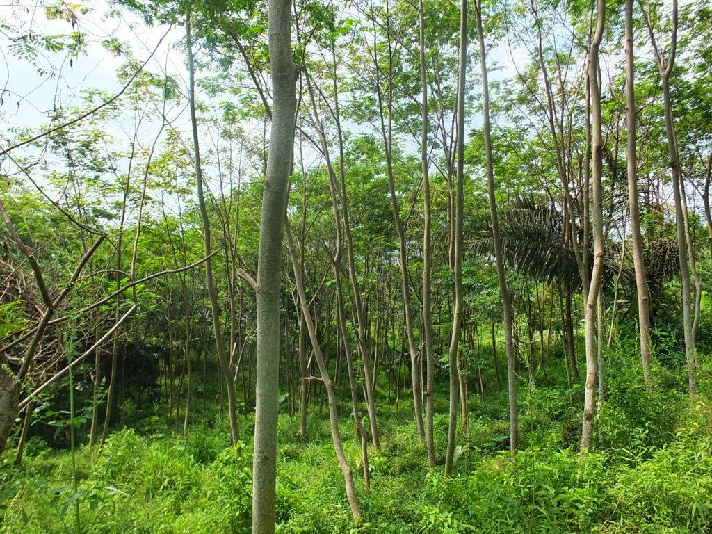 DSCF1831+(FILEminimizer) Jual Tanah Kebun Albasiah 6 HA Di Kec Pacet Jual tanah di cipanas