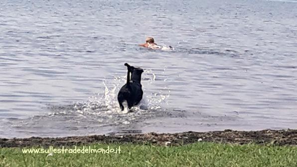 spiaggia per cani al lago di bracciano