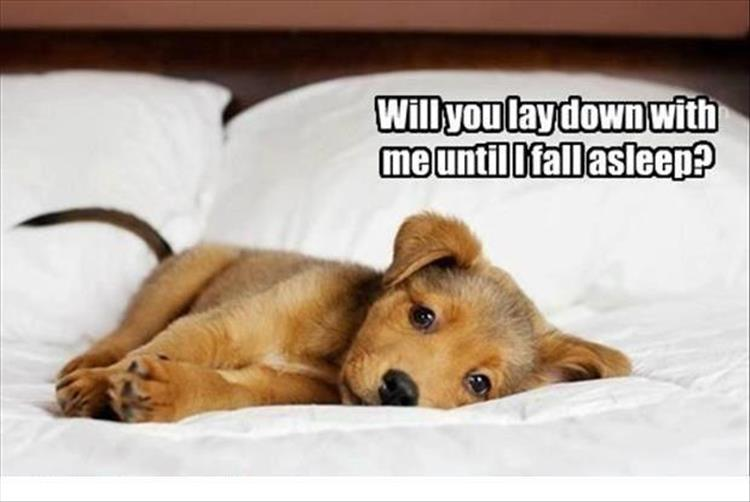 30 Funny animal captions - part 50, animal picture, funny caption animal pictures