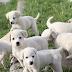 Τα σκυλάκια της φωτο είναι έτοιμα για υιοθεσία ! - Ο Πολιτιστικός Σύλλογος Μονοπήγαδου ψάχνει να τα βρει οικογένεια