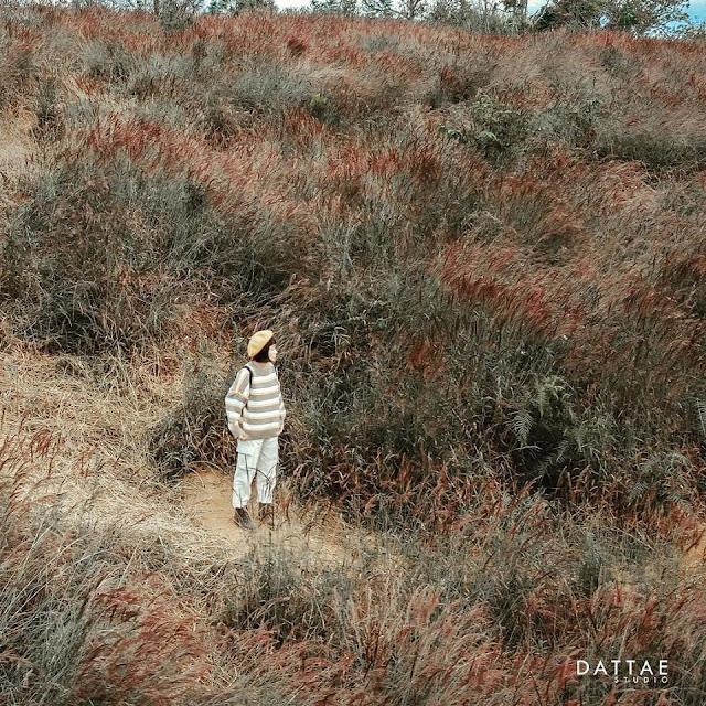 Đến với Đà Lạt hãy ngắm đồi cỏ hồng đuôi chồn đẹp tựa xứ Nhật Bản đẹp mê hồn 5