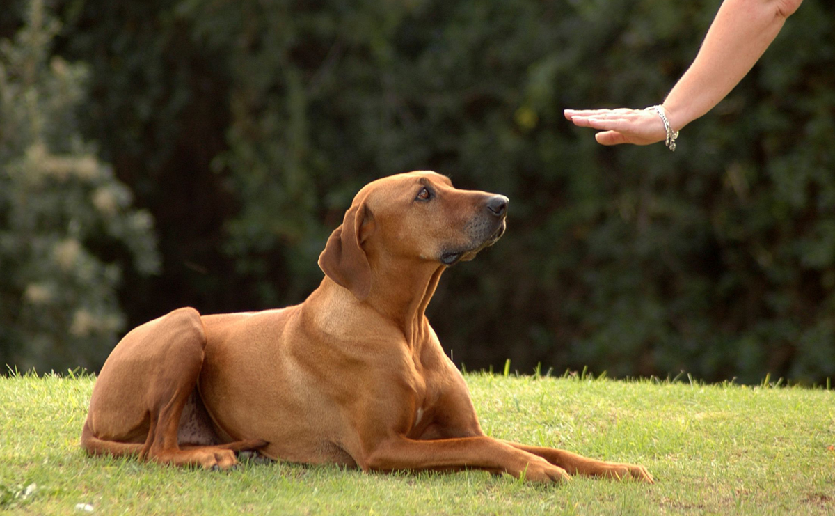 How To Teach Your Dog To Stay Calm On Walks