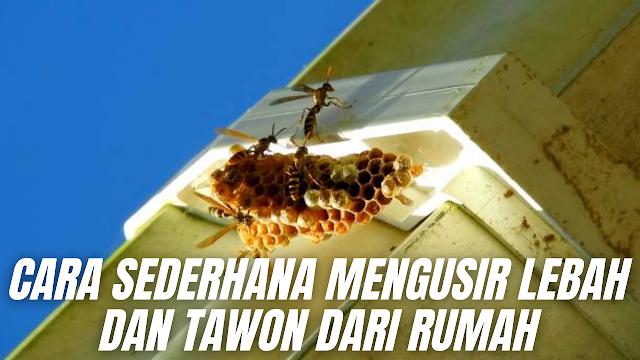 Cara Sederhana Mengusir Lebah dan Tawon Dari Rumah Seperti yang telah dijelaskan diatas sebenarnya lebah tidak mengganggu kita, hanya saja apabila lebah dan tawon bersarang dirumah kita maka itu sangat membahayakan. Karena apabila kita tidak sengaja berdekatan dengan sarangnya maka kita akan diserang, hal ini terjadi karena naluri dari lebah dan tawon di dalam menjaga sarangnya. Nah berikut ini ada beberapa cara sederhana di dalam mengusir tawon maupun lebah.  Cara Mengusir Lebah Dengan Bubuk Bawang Putih Caranya cukup dengan menaburkan bubuk bawang putih didekat sarang tawon secara perlahan agar tawon dan lebah tidak merasa terusik. Secara perlehana nanti tawon dan lebah akan pergi dari sarangnya dan membuat sarang baru ditempat lain, hal ini terjadi karena aroma bawang yang tidak disukai oleh mereka.    Cara Mengusir Lebah Dengan Bubuk Lada Caranya cukup dengan mencampurkan beberapa sendok bubuk lada dan bubuk cabe dengan air, lalu dimasak hingga mendidih. Kemudian setelah dingin dimasukan ke dalam botol semprot, lalu menyemprotkannya disekitar sarang lebah. Namun untuk keamanan pakailah baju yang bisa menangkal sengatan tawon atau lebah, karena apabila kita pada saat menyemprot dikhawatirkan lebah atau tawon terusik sehingga menjadi menyerang kita.    Cara Mengusisr Lebah Dengan Kapur Barus Caranya cukup dengan mengantungkan kapur barus di dekat sarang tawon dan lebah. Caranya masukkan terlebih dahulu kapur barus ke dalam sebuah kantong model jaring atau kaus kaki yang sudah dibolongi kecil-kecil, lalu menaruhnya di dekat sarang lebah atau tawon.    Cara Mengusisr Lebah Dengan Air Sabun Caranya cukup dengan mencampurkan sabun cair dengan air, lalu diaduk hingga merata. Selanjutnya dimasukan ke dalam botol semprotan, kemudian semprotkan air sabun ke sekitar sarang tawon agar lebih aman. Namun jangan lupa memakai baju pelindung dari sengatan tawon dan lebah, agar tetep aman.    Nah itu dia bahasan dari bagaimana cara sederhana mengusir lebah dan tawon dari rumah, m