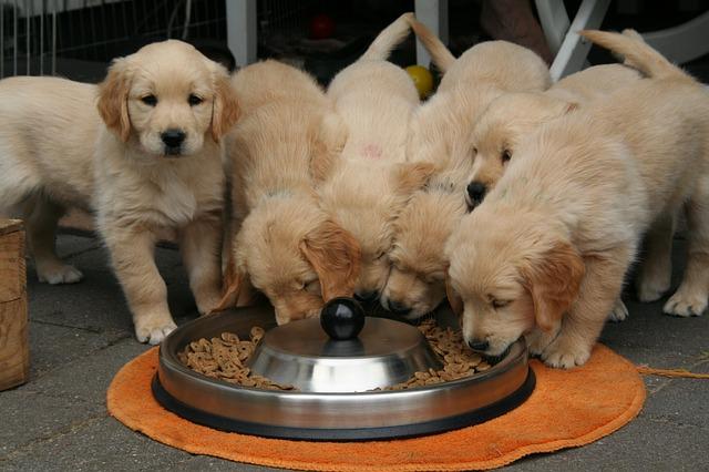 Como fazer ração de cachorro em casa