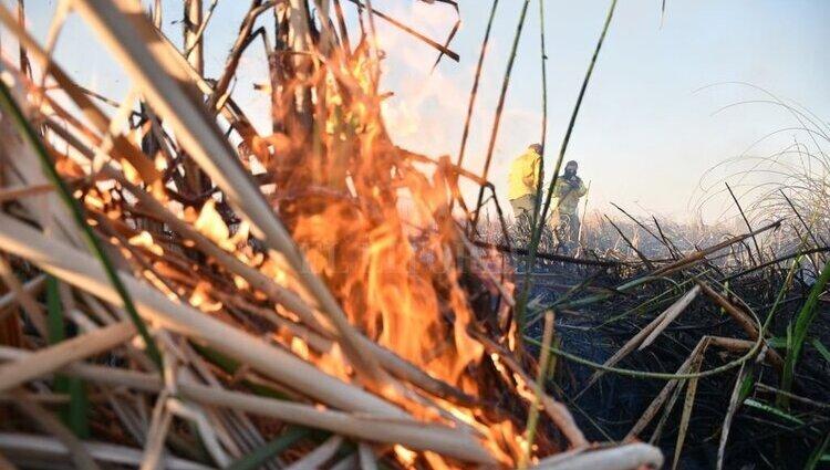 Promulgan la ley de Manejo del Fuego que prohíbe la venta de terrenos incendiados