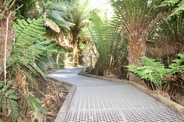 boardwalk above rainforest floor