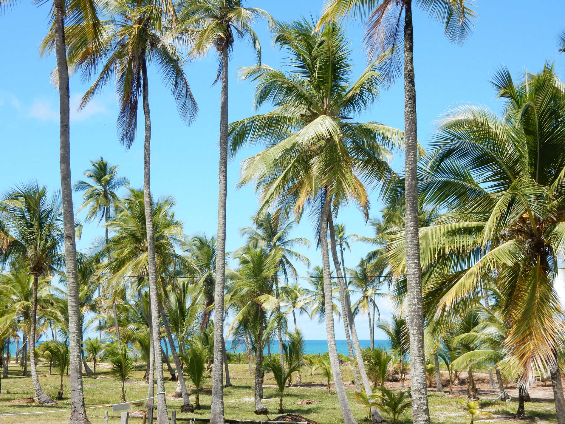 praia cassange barra grande bahia
