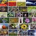 Global Biodiversity Outlook: Luonnon monimuotoisuuden kehitys edelleen kielteistä, politiikkatoimien oikea kohdentaminen välttämätöntä