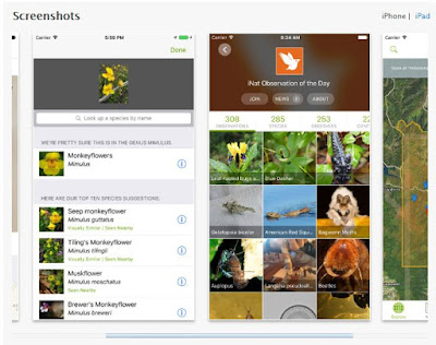 The iNaturalist app is available through the Apple app store or Google Play.