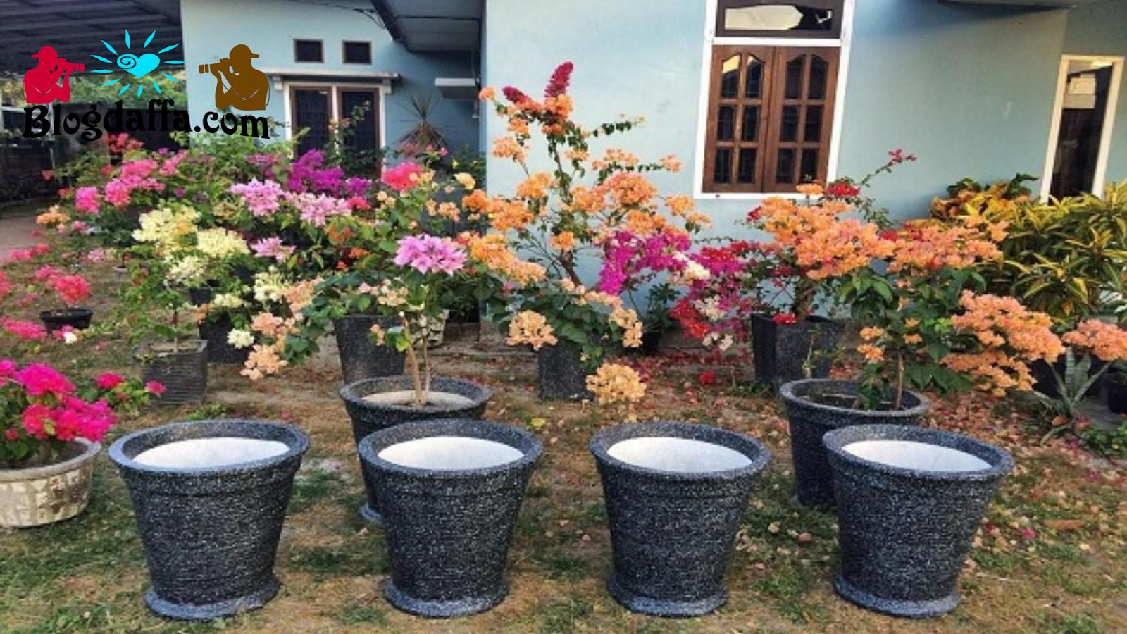 Cara Merawat Tanaman Bunga Kertas