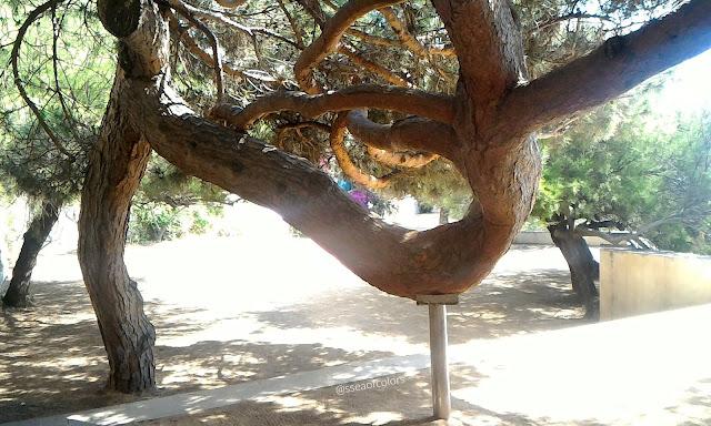 Camino de ronda S'agaró pino