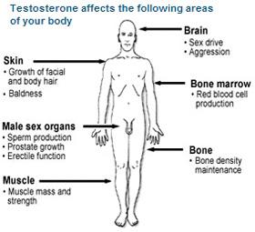 no sex hormone in body, sex hormone treatment in chennai