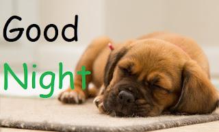 good night cute dog
