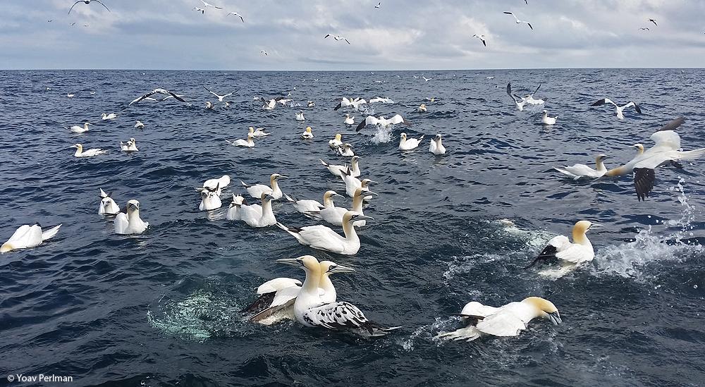 Scotland #3 – Seabird Extravaganza