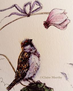 garden bird illustration bird paintings