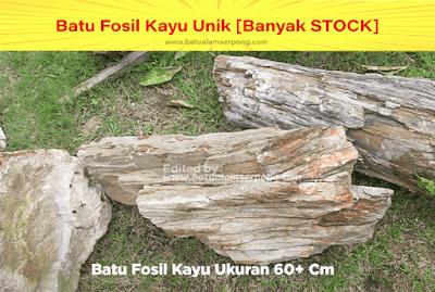 batu fosil kayu arang