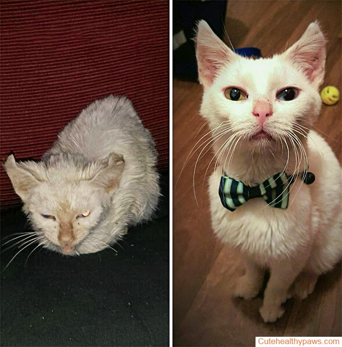 Pugsley The Rescue Cat Before And After