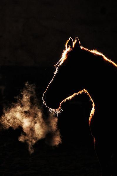 Hơi thở của con ngựa