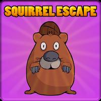 Forest Brown Squirrel Escape