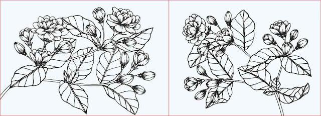gambar-sketsa-bunga-melati