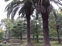 Palm trees can grow in Tokyo - Tokyo Imperial Gardens, Japan