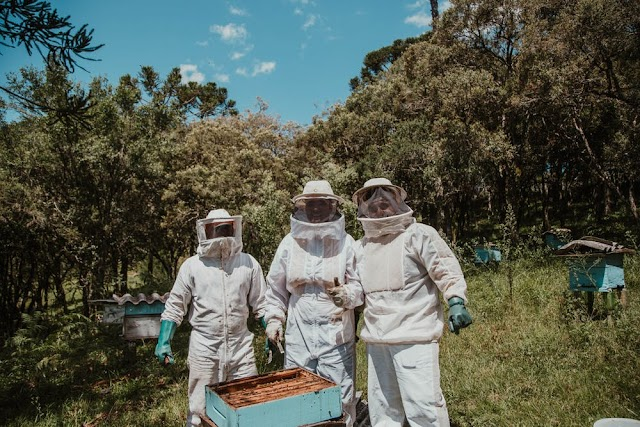 10 important facts about beekeeping benefits: