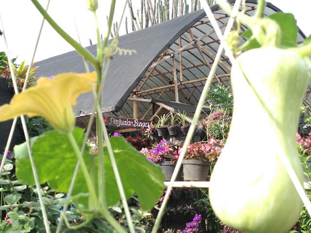 Harga Tiket Masuk Kebun Begonia Lembang