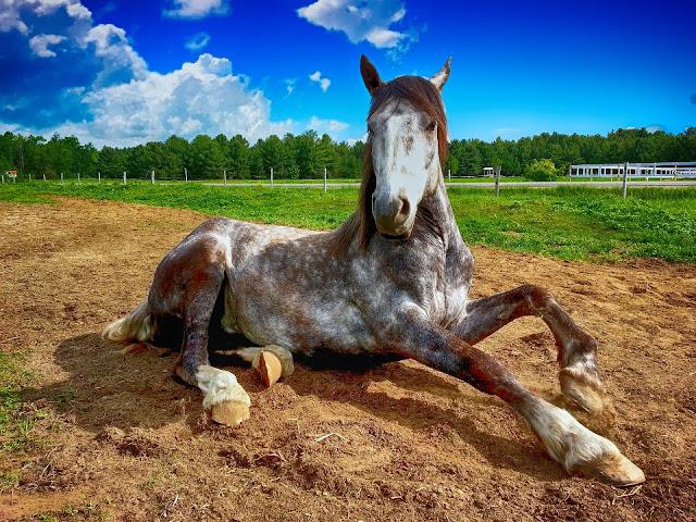 disney horses post university equine