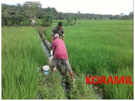 Serka Subandi Dampingi Penyemprotan Hama di Areal Sawah Lingkungan Sei Tembo