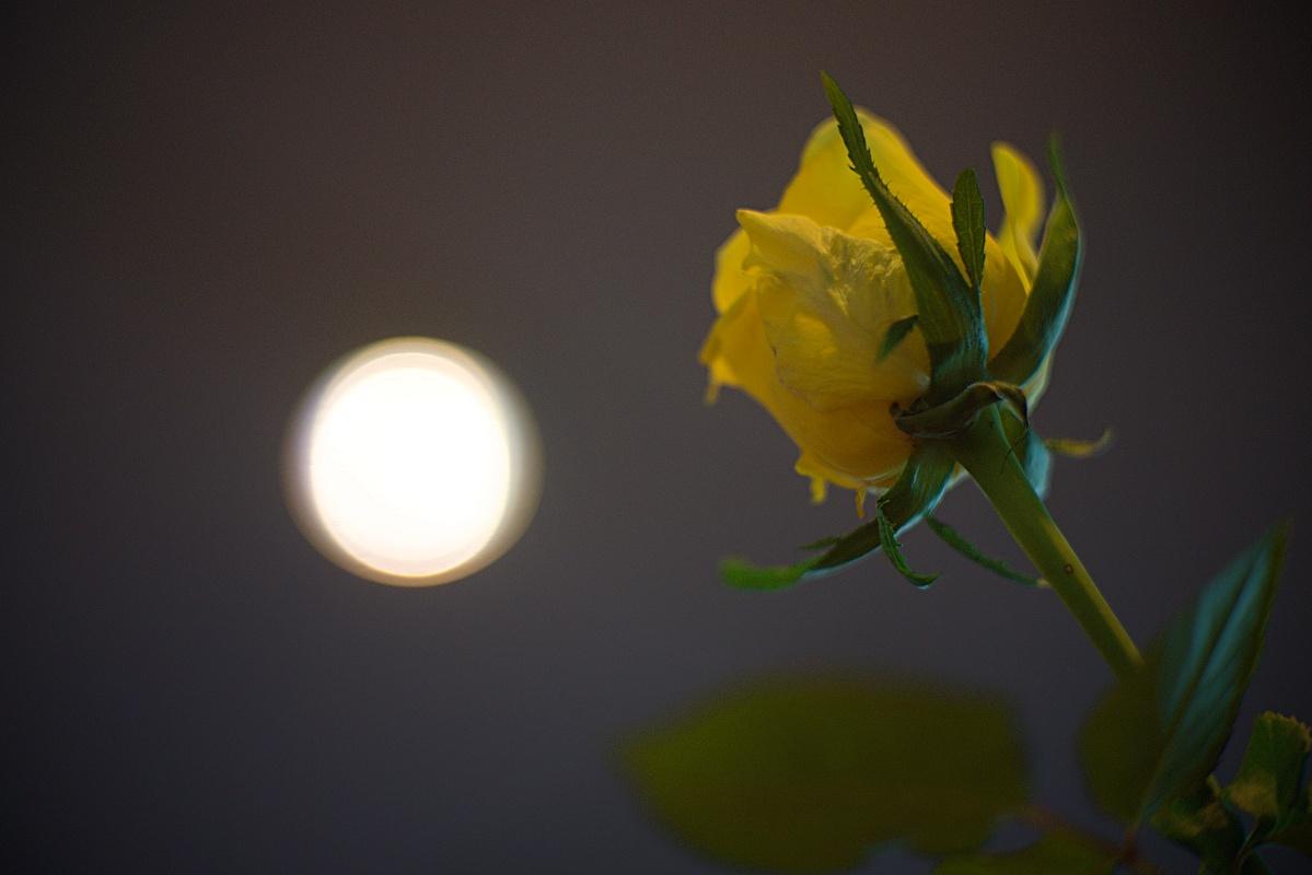 #294 ASTRO-KINO-COLOR V f1.5 50mm – Gelbe Dekorose