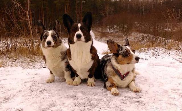 podróże z psem, z psem w góry, karkonosze z psem