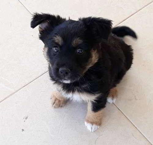 cachorra talla pequena