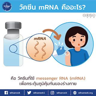 วัคซีนชนิด mRNA คืออะไร? และเรื่องน่ารู้เกี่ยวกับวัคซีนป้องกันไวรัสโควิด 19 [COVID-19]