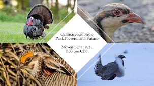 Laura's November 1 Zoom program: Gallinaceous Birds!!