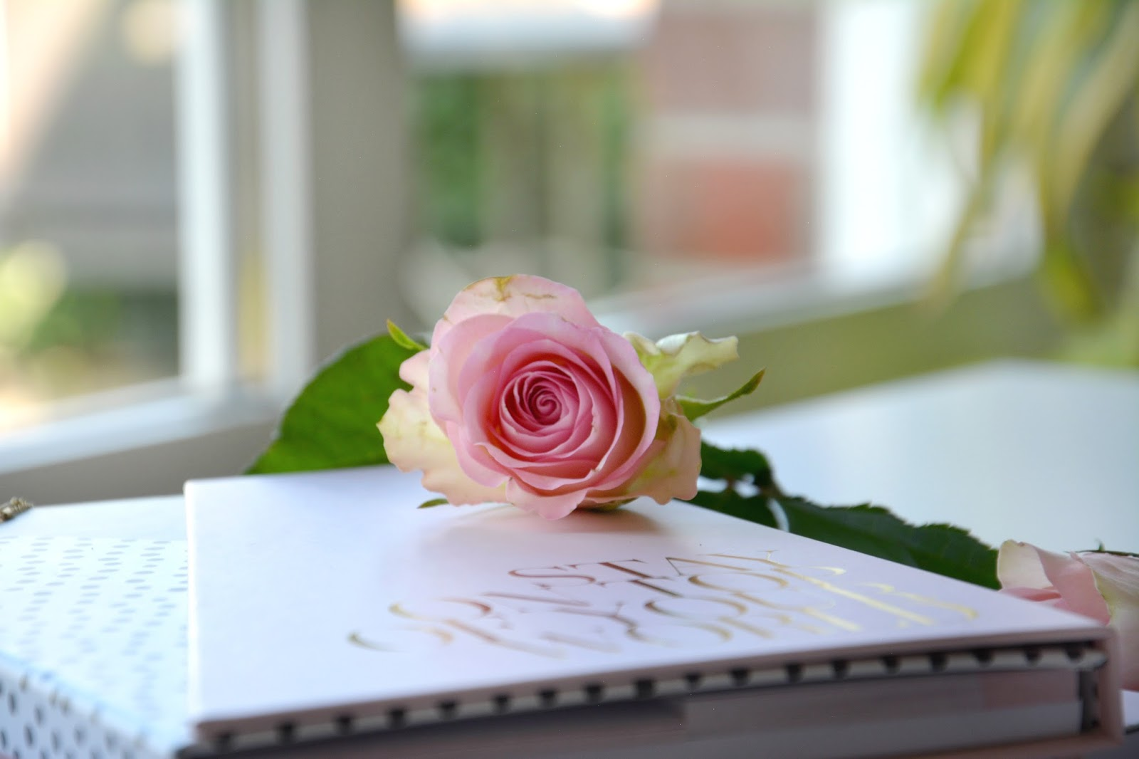 Fresh Pink Rose; Zoella Stationery Book